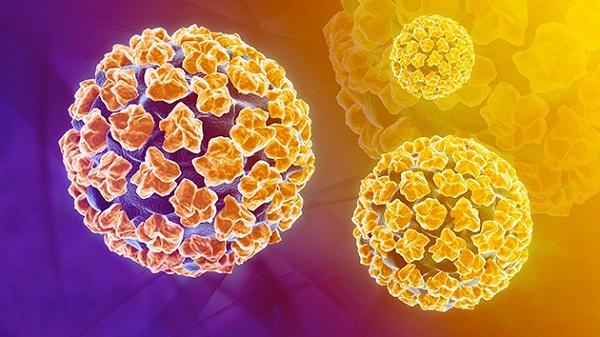 Virus HPV là nguyên nhân chính gây ung thư cổ tử cung ở phụ nữ.