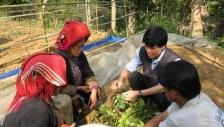Điều tra tái sinh nguồn cây thuốc tắm của người Dao đỏ - Dao'spa mama